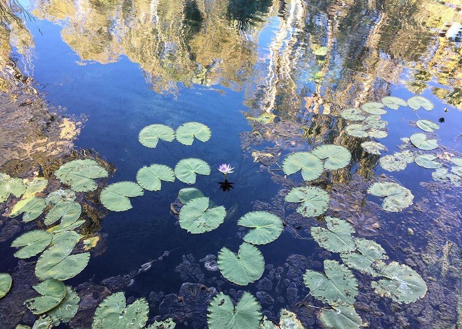 Pond surface.
