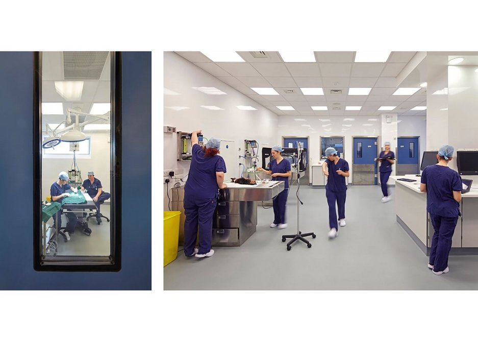 Trovex diamond hygienic wall cladding at Battersea Dogs and Cats Home's.