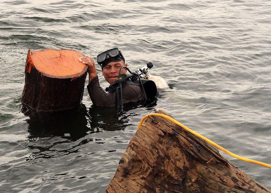 A diver brings up a felled log.
