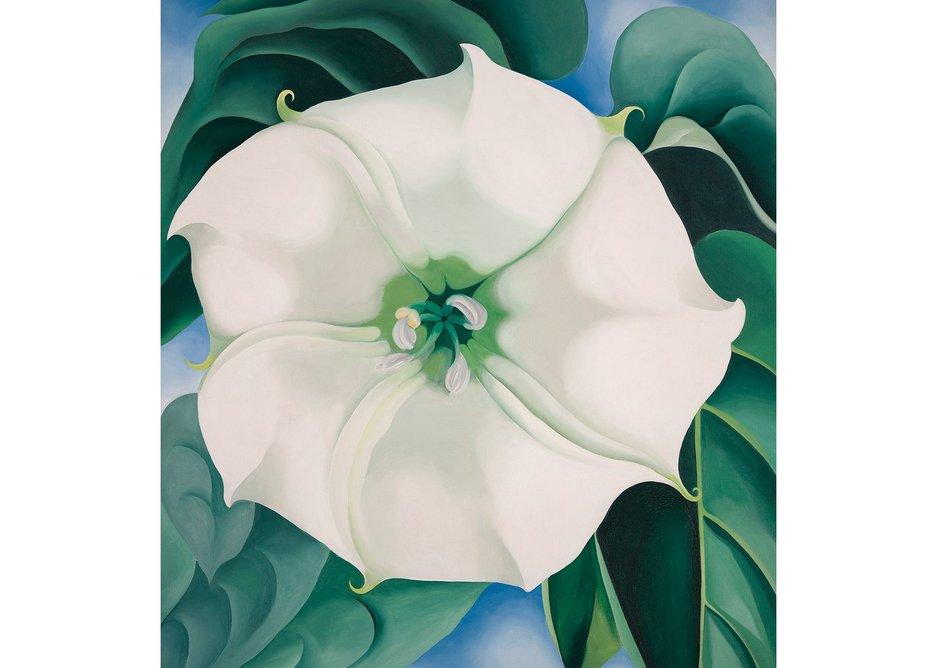 Jimson Weed/White Flower No. 1 by Georgia O'Keeffe,1932. Crystal Bridges Museum of American Art, Arkansas, USAPhotography by Edward C. Robison III.