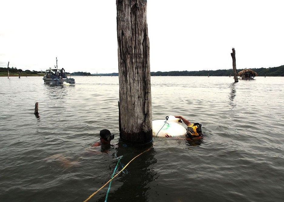 Lake tree divers