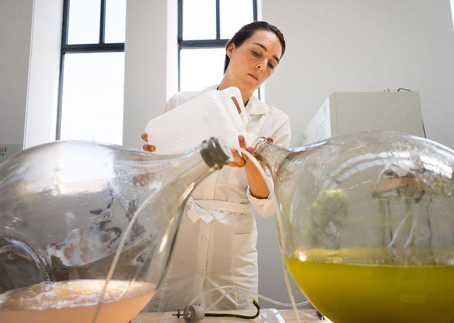 Making bioplastic from algae, Studio Klarenbeek & Dros at the Luma Foundation.