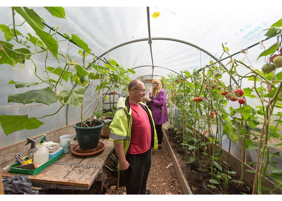 Growing tomatoes at Thamesmead.