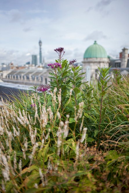 Planted rooftops amid the Crown Estate in central London.