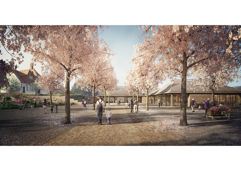New avenue of cherry trees at RHS Garden Wisley.