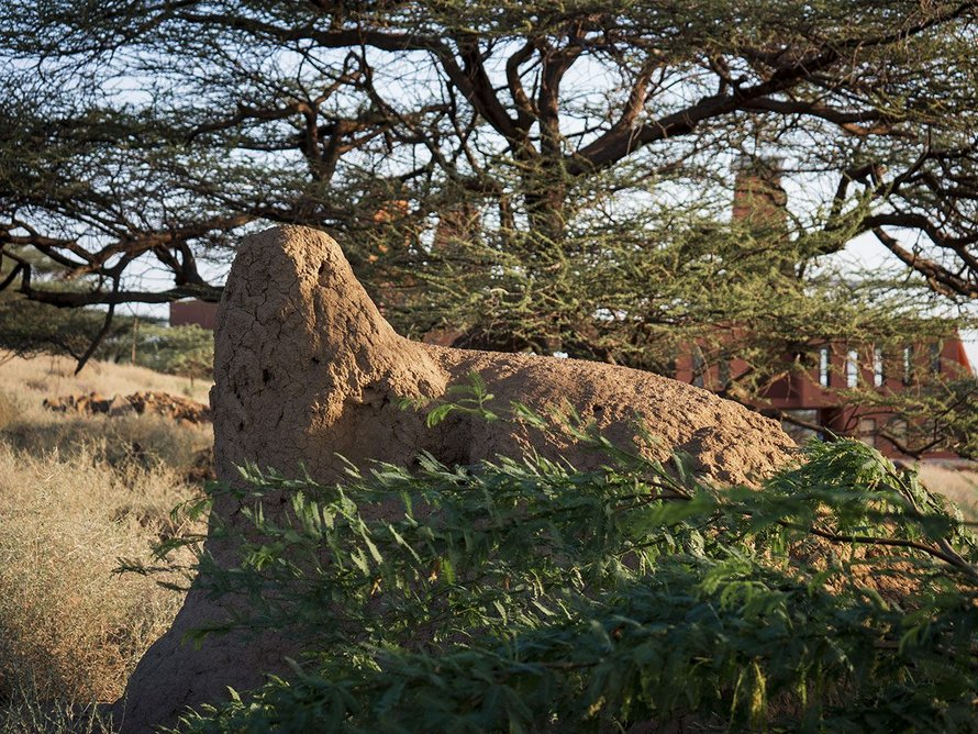 Termite mounds inspired the building's design.