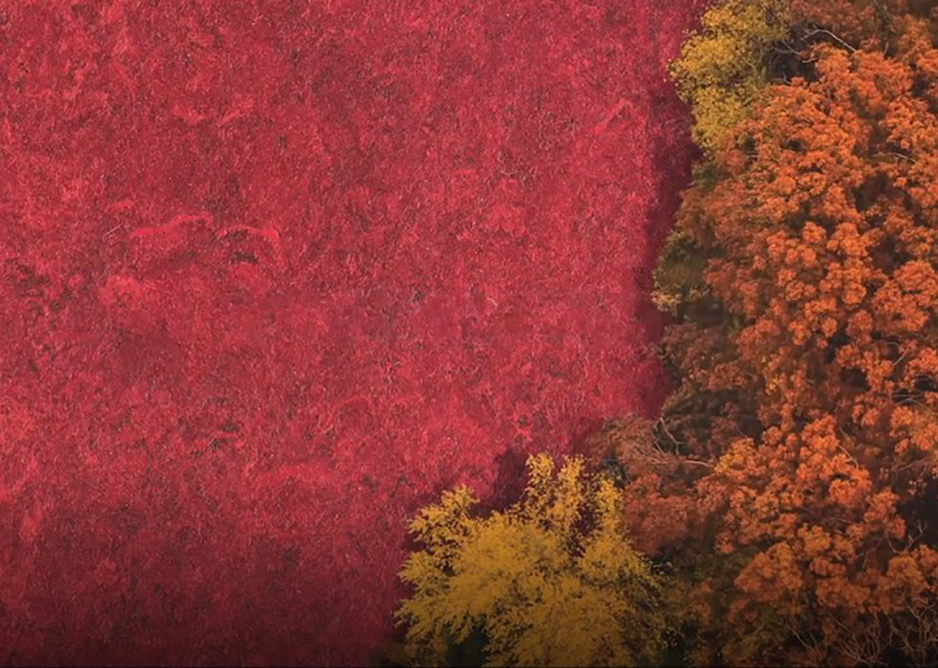 Seeing red: Marmorette DLW Linoleum flooring in Lobster Red 0018.