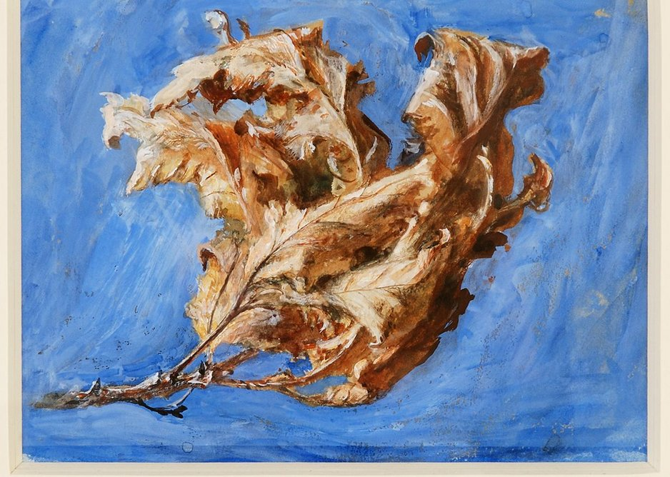 John Ruskin, Study of Spray of Dead Oak Leaves, 1879, © Collection of Guild of St George / Museums Sheffield
