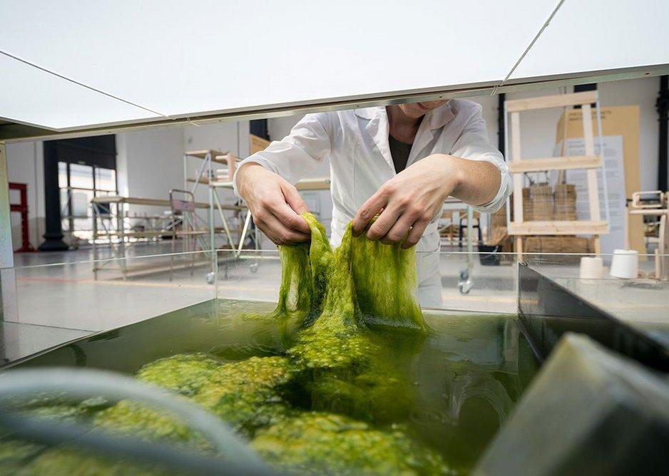 Making bioplastic from algae, Studio Klarenbeek & Dros at the Luma Foundation