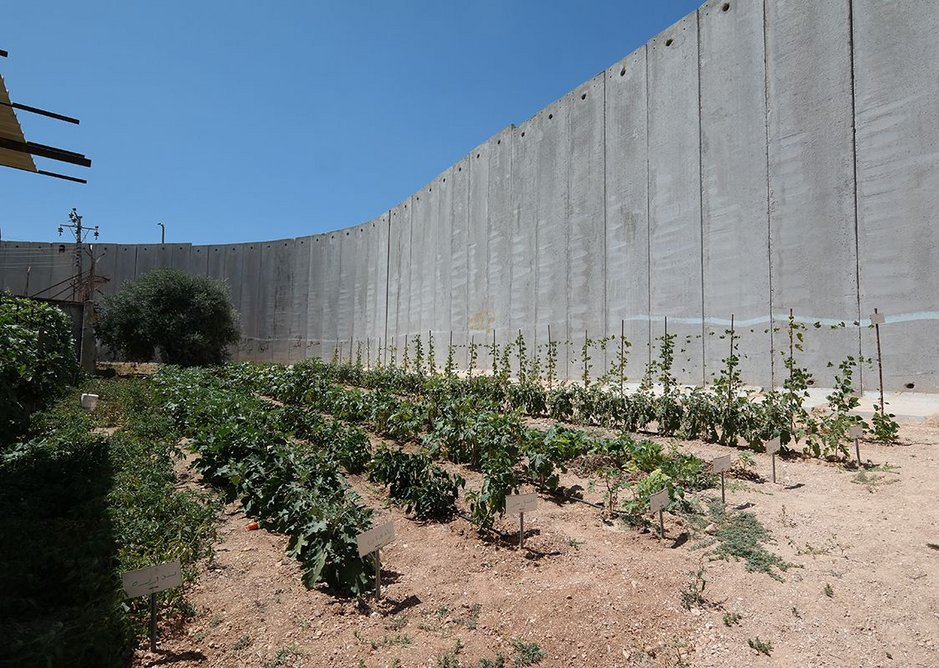 Munther Bandak's new allotment up against the wall that divided his land.