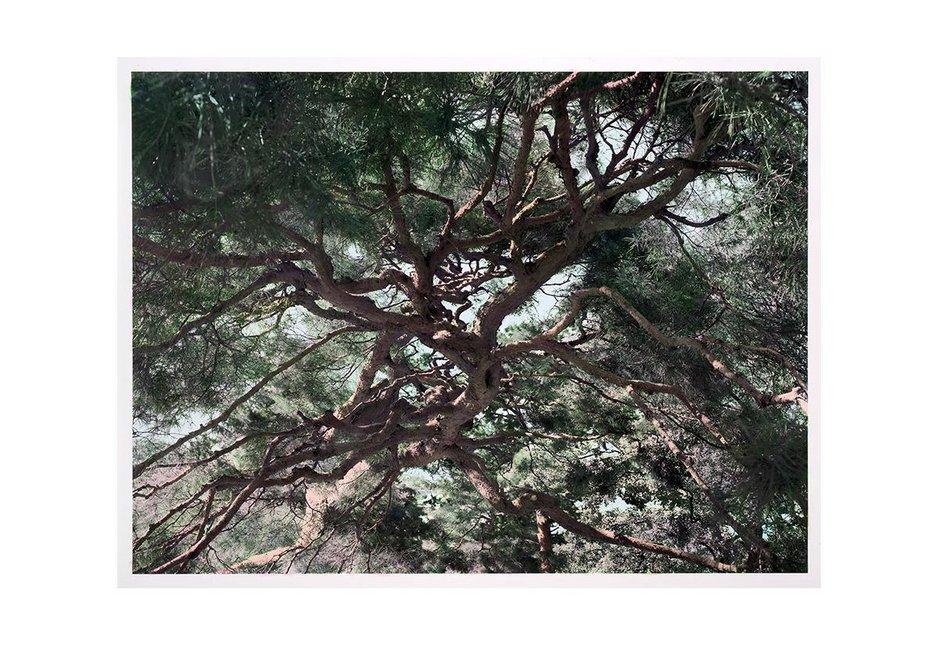 Shi Guowei Pine, 2016 Painting on photograph 142 x 190.3 cm