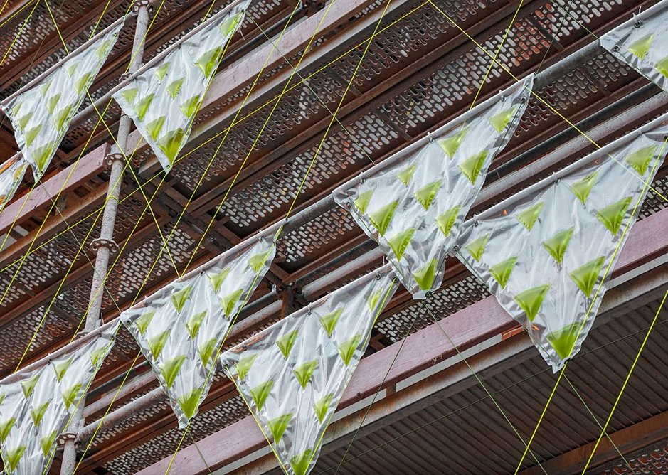 Prototype algae curtains were able to remove one kilo of CO2 per day, equivalent to 20 large trees.