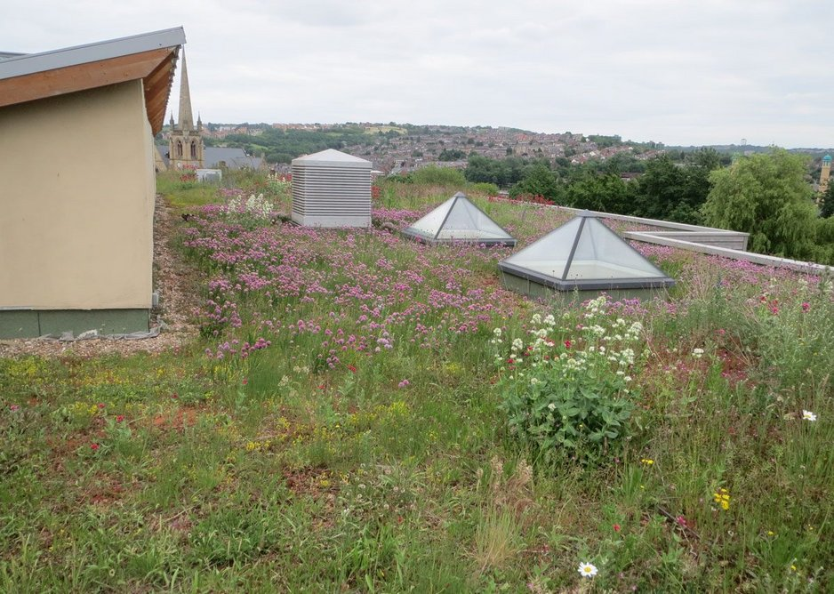 A wilder version of a green roof.