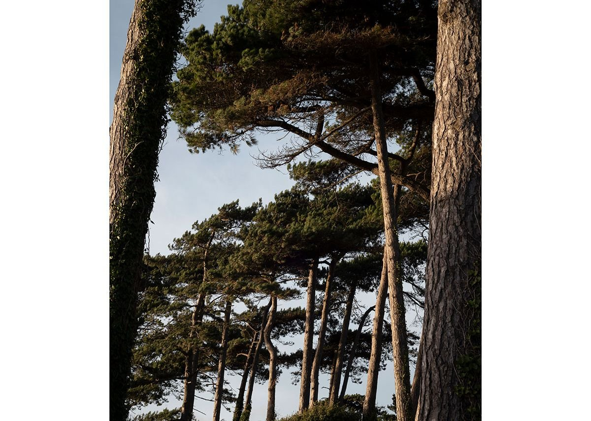 View of the maritime pines from the seating area. The Lookout, Lepe Country Park by Hampshire County Council Property Services.