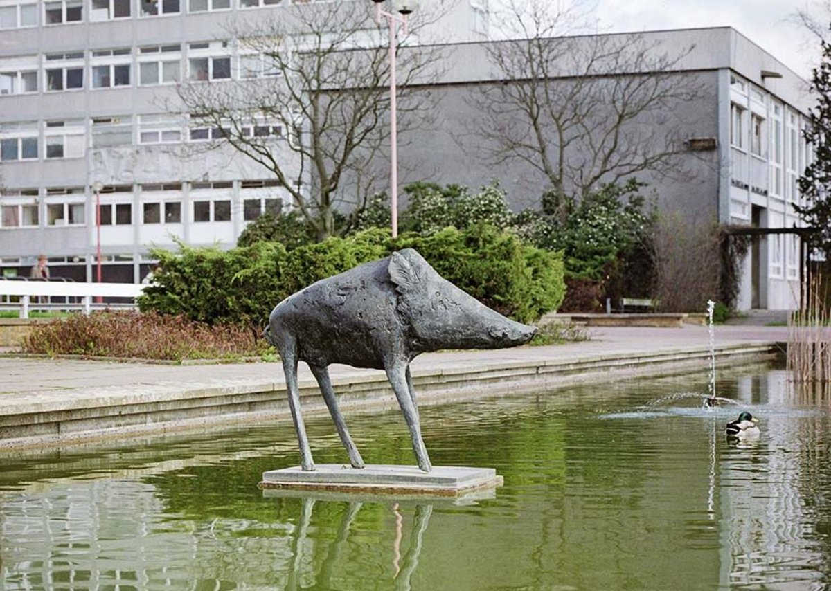 In Harlow: Elisabeth Frink, Boar, 1970, taken in 1998.