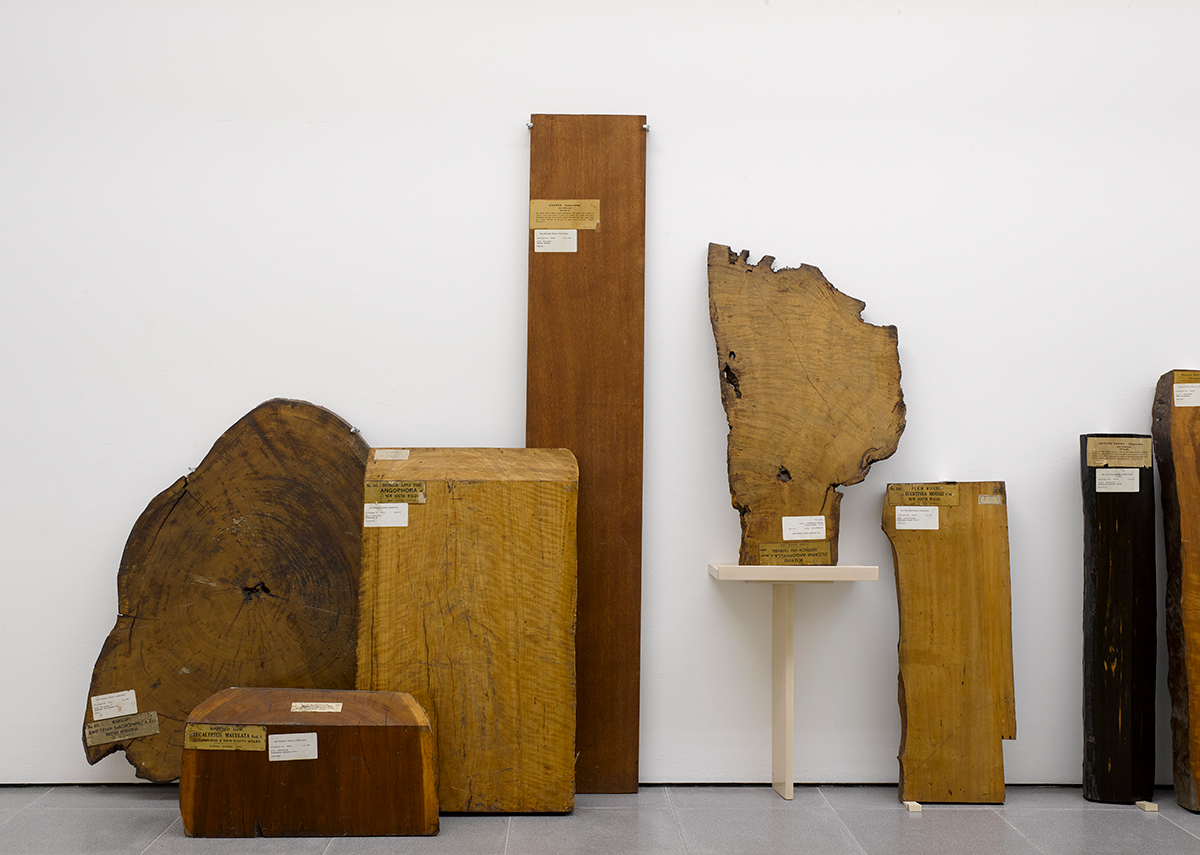 Installation view of Formafantasma: Cambio at the Serpentine Galleries, London. Photo credit: George Darrell. The display shows some of the larger samples from The archive of lost forests, 2020 the Economic Botany Collection at Kew Gardens