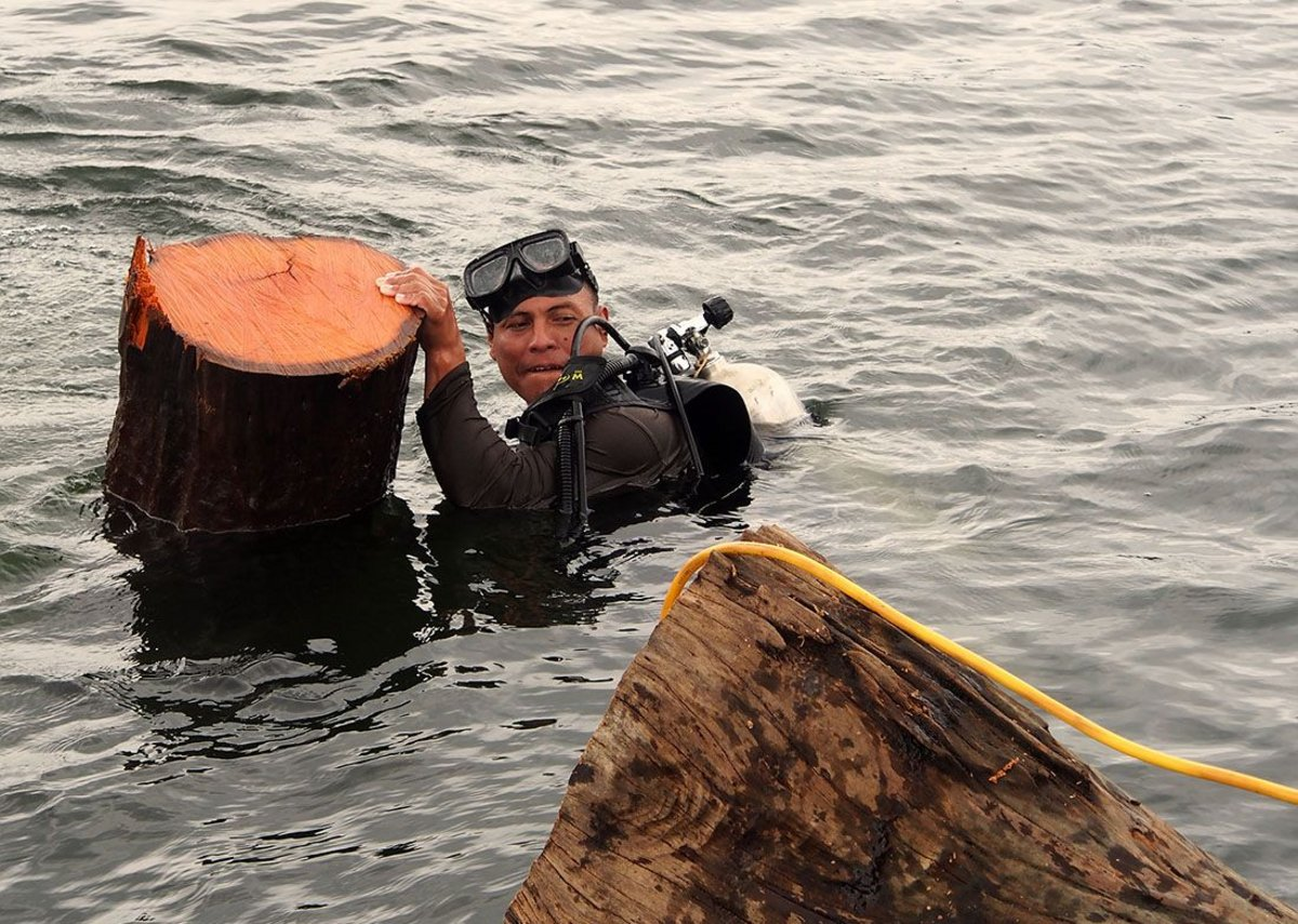A diver brings up a felled log.