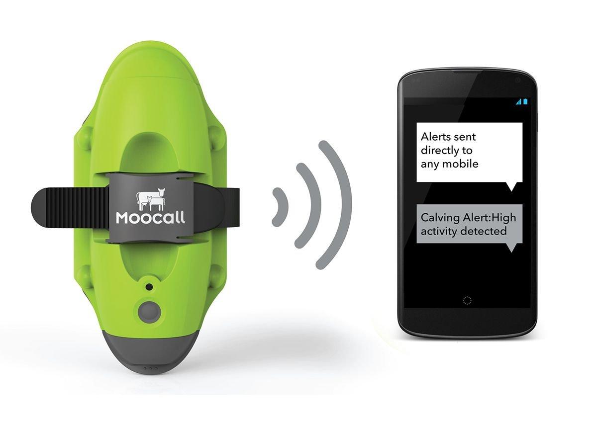 Moocall SMS Calving Alert Sensor by Dolmen