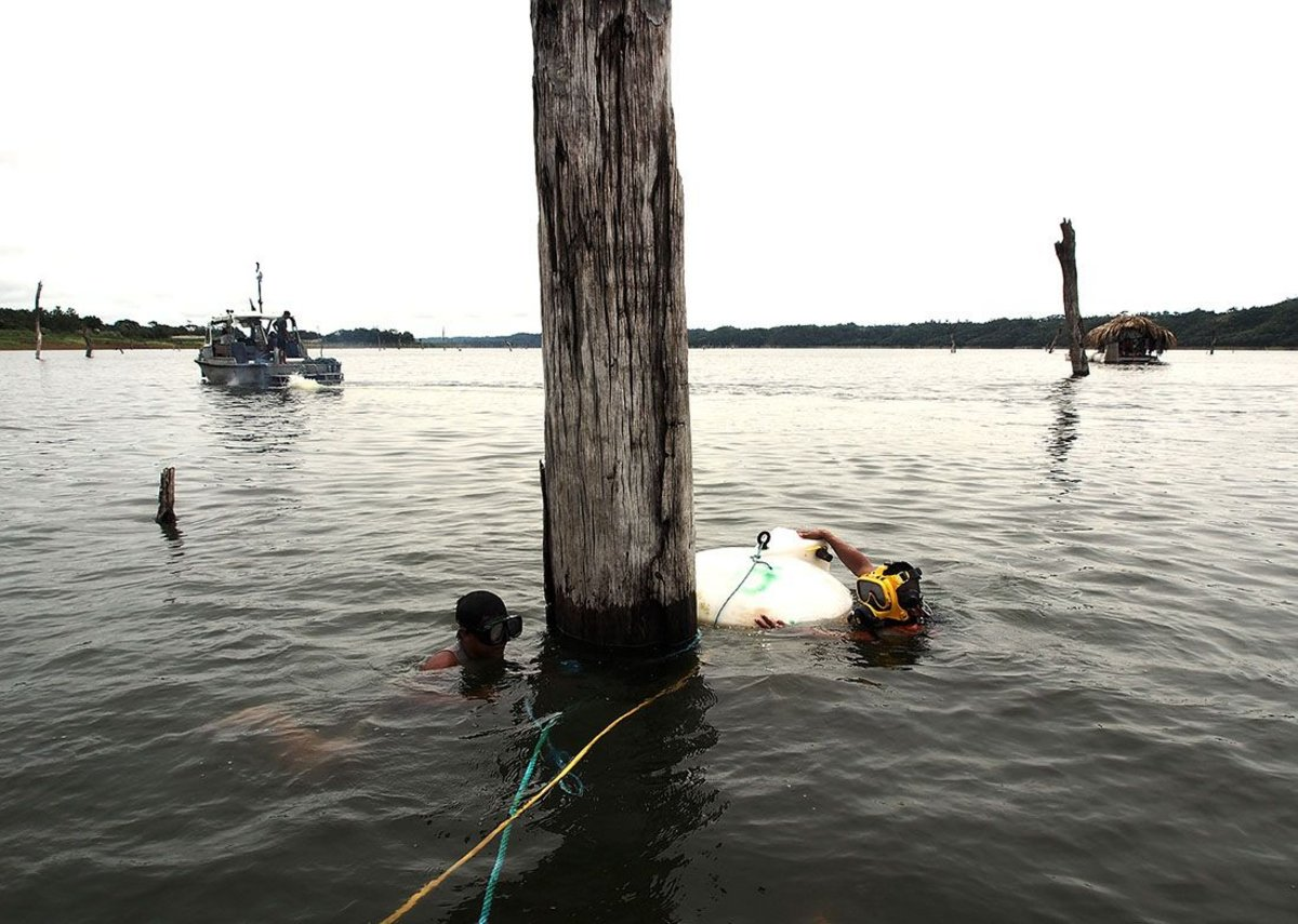 Lake tree divers