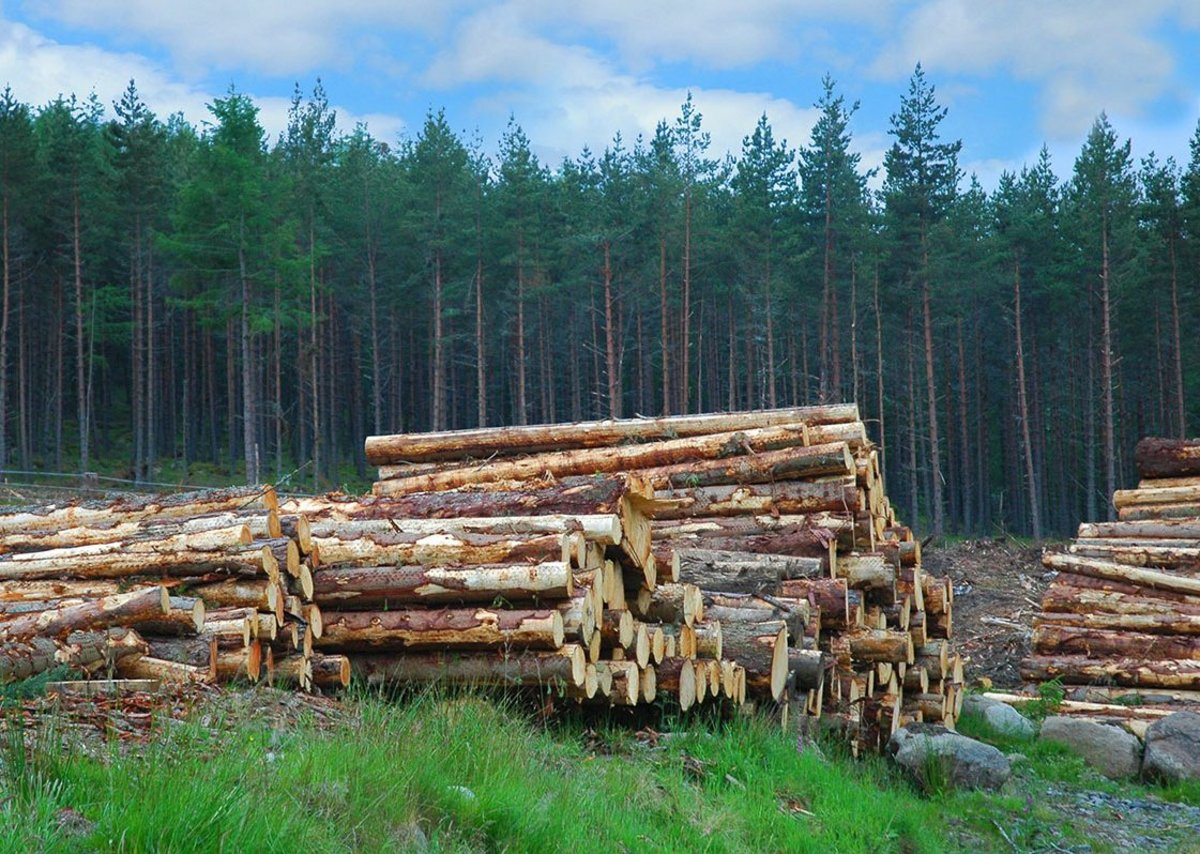 Increasing the use of Scottish timber in construction could lower costs and create green jobs.