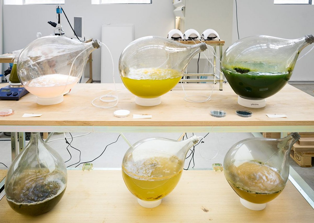 Algae Lab explores the potential of polymers derived from algae in 3D printing.