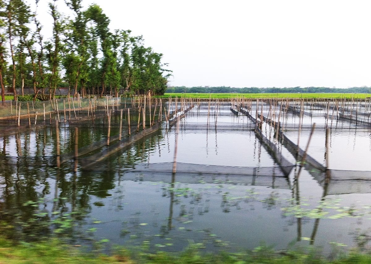 The Rajapur village communities embrace water and the rainy season in agriculture  with irrigation of rice fields, while seeking protection from extreme flooding