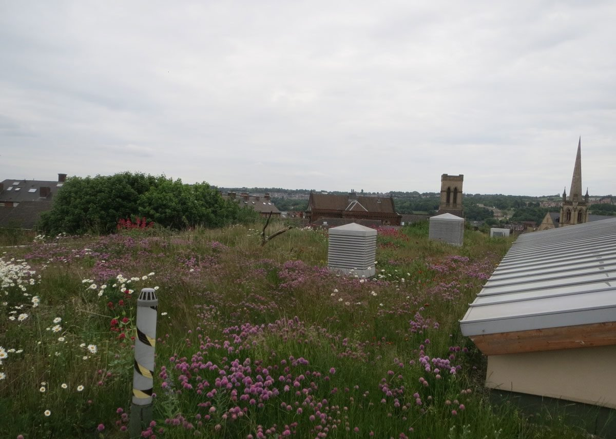 New substrate standards designed for the UK should help ensure more working green roofs.