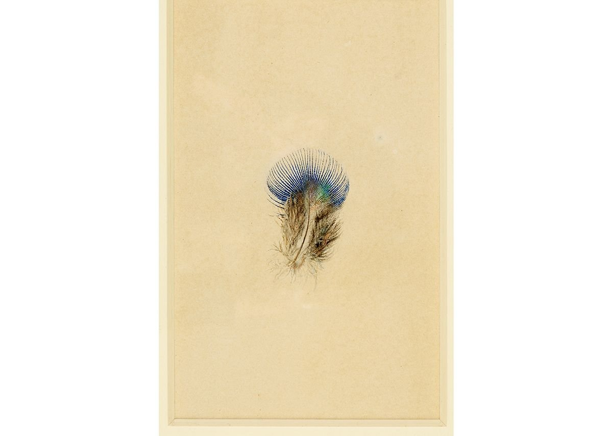 John Ruskin, Study of a Peacock's Breast Feather, Collection of the Guild of St George / Museums Sheffield