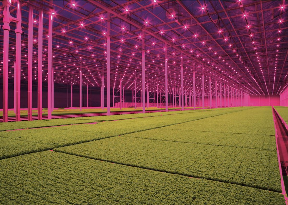 LED lights, Koppert Cress © Jan van Berkel, from Smart Farming, part of the Dissident Gardens exhibition programme at the Het Nieuwe Instituut in Rotterdam.