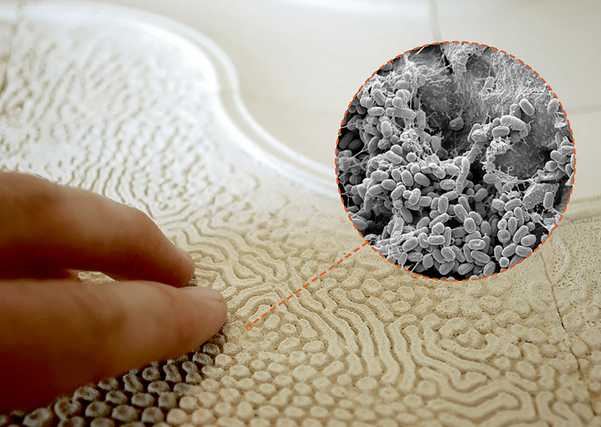 Meso Scale  Design of probiotic surfaces.
