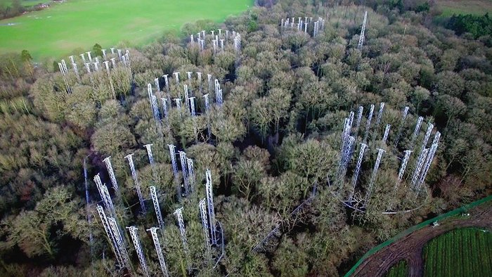 CO2 levels are increased in specific areas of the wood.