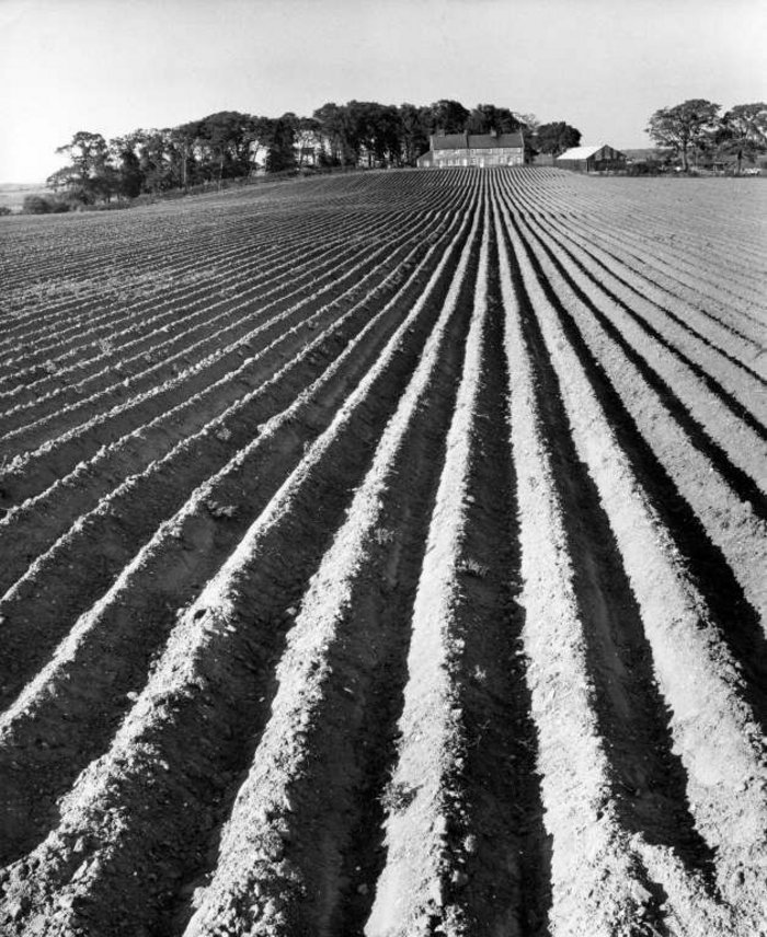 Nostalgia and record sit side by side in Smith's work, as here: the cottage looking out over its working landscape of the newly ploughed field, Holkam, Norfolk (1970).