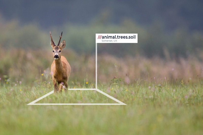 Heal Rewilding's fundraising includes sponsorship of 3m x 3m squares of land that it can bring back to life through rewilding.
