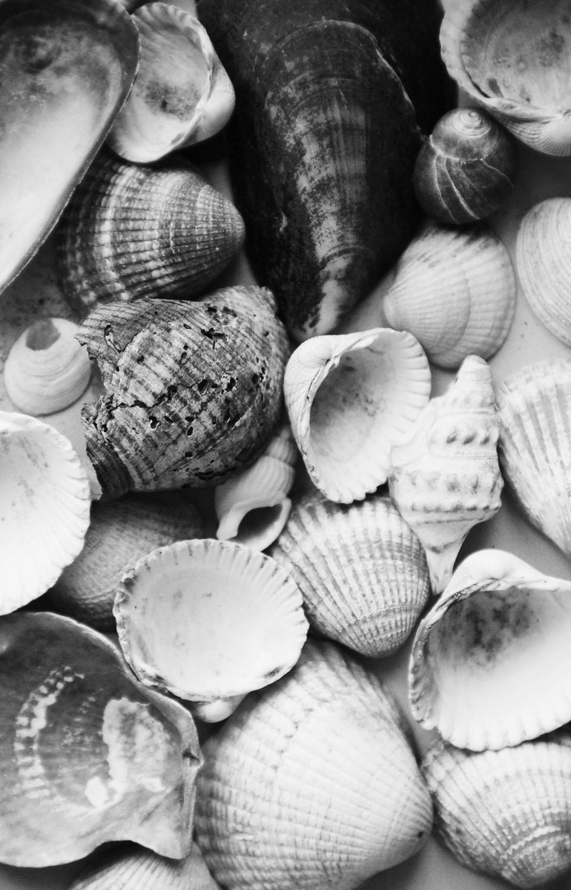 Specimens of shells – instances of natural nooks.