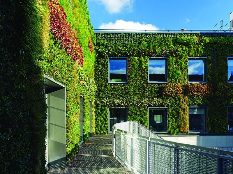 The living wall of the courtyard is a soft and surprising counterpoint to the vertical fins of the south elevation.