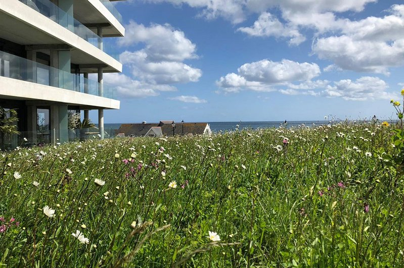 Sika biodiverse green roofing system at The Liner holiday accommodation, Falmouth.